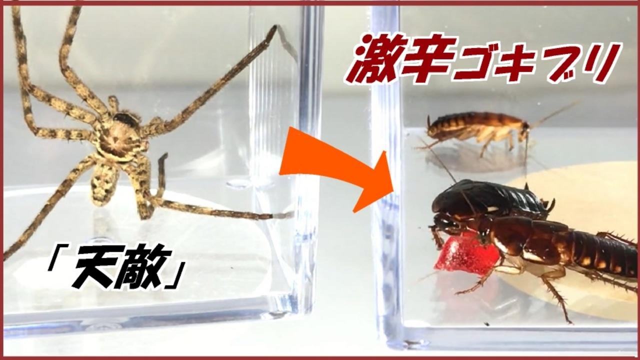 を 食べる クモ ゴキブリ ゴキブリを食べる虫4種とペット8種。天敵軍でゴキ撃退!?